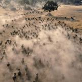 mandria-di-bufali